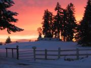 snowymorning